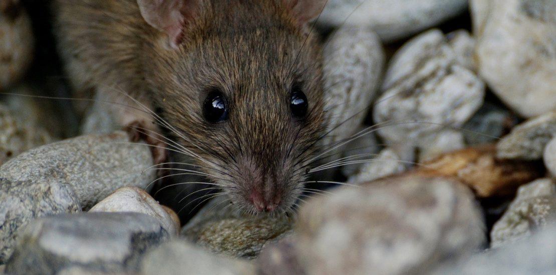 Boj proti myším