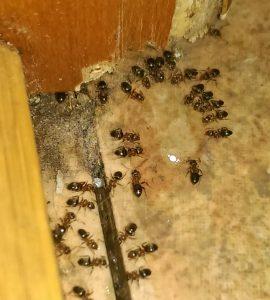 Hubení mravenců profesionální gelovou požerovou nástrahou