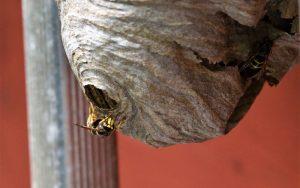 Vosí hnízdo (Foto: wallpaperflare.com)